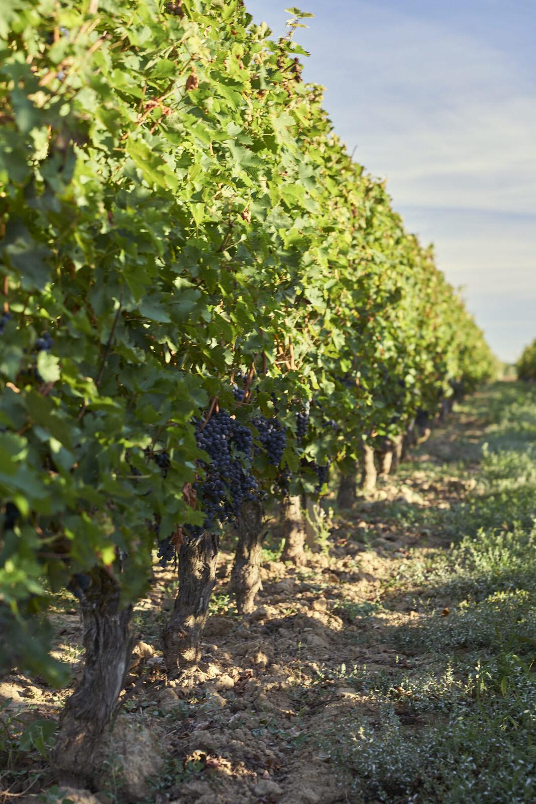 Reportage photo - Domaine viticole 1