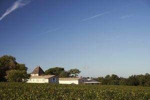 Domaine viticole - vignoble francais - Vigne bordelaise - Photographe professionnel - bordeaux - Gironde - Nouvelle aquitaine - Thierry Pousset