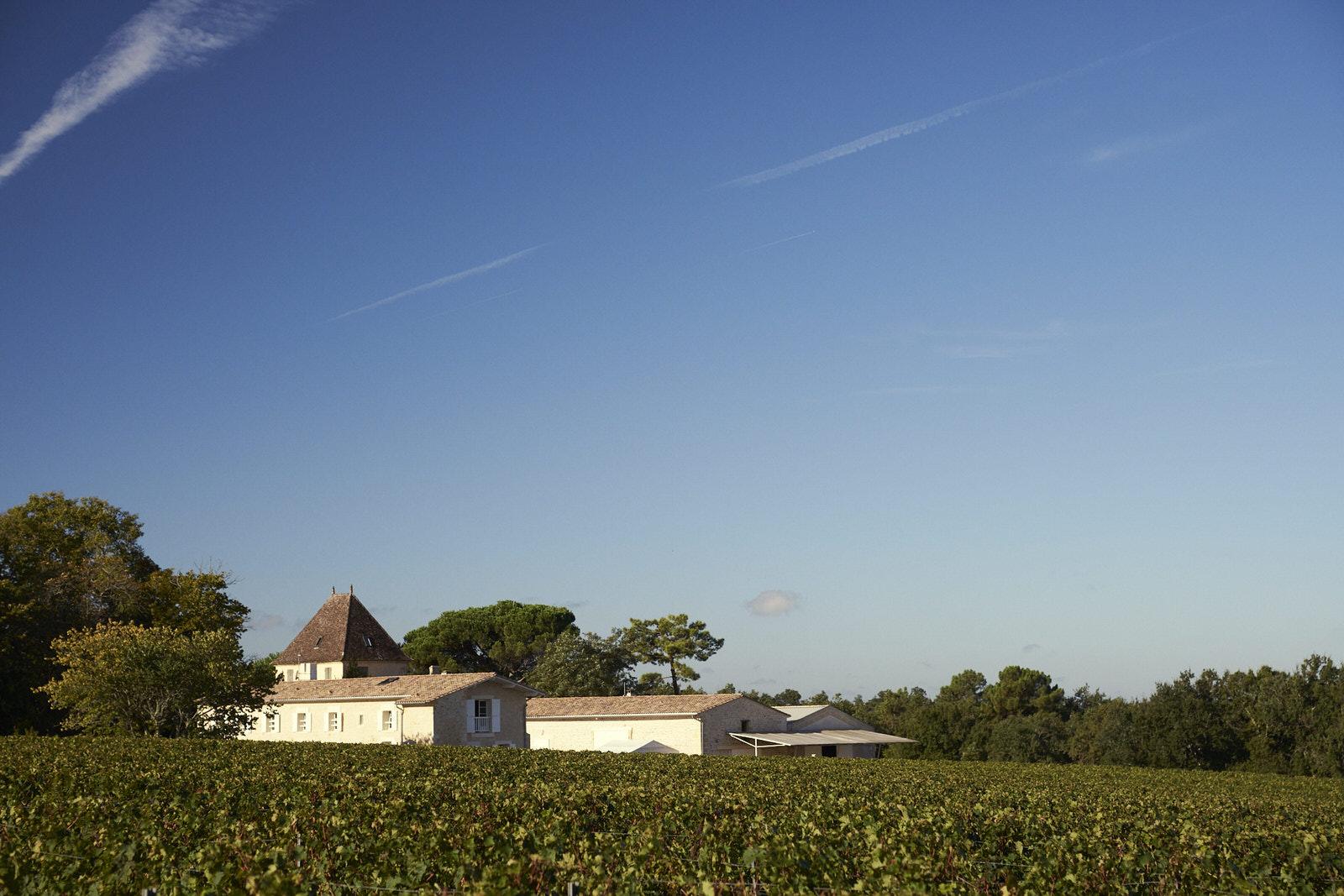 Reportage photo - Domaine viticole 15