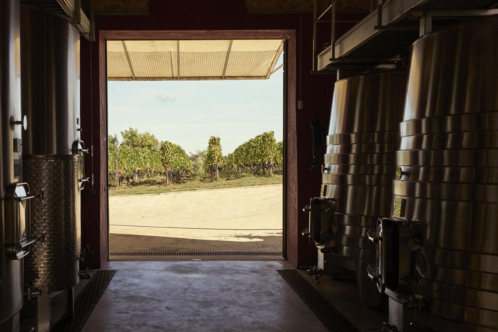 Reportage photo - Domaine viticole 8