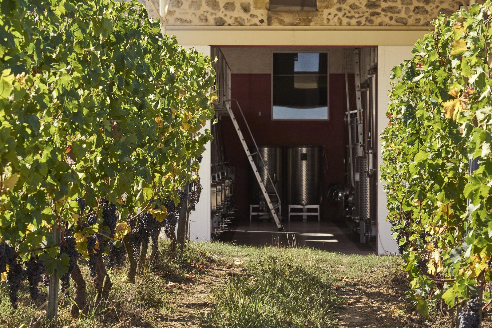 Reportage photo - Domaine viticole 3