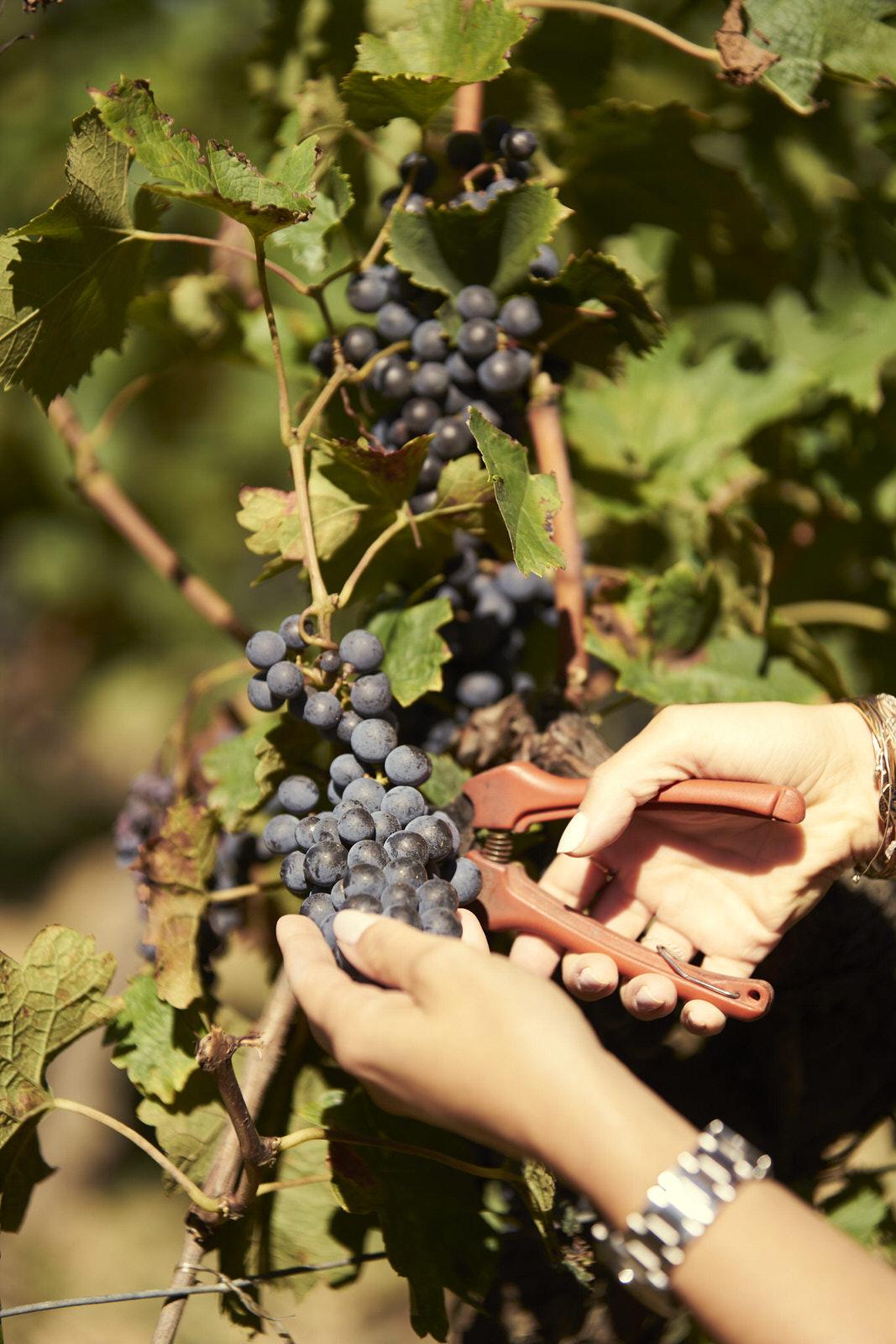 Reportage photo - Domaine viticole 5