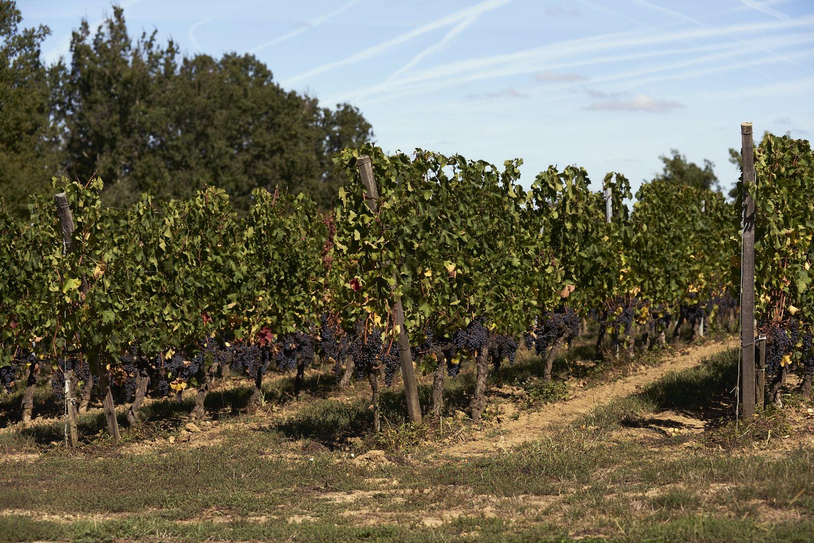 Photo de Vigne - Château - Reportage - Domaine viticole - Photographe professionnel - Thierry Pousset - Bordeaux - Gironde