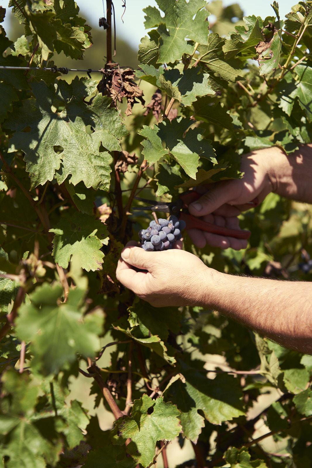 Reportage photo - Domaine viticole 2