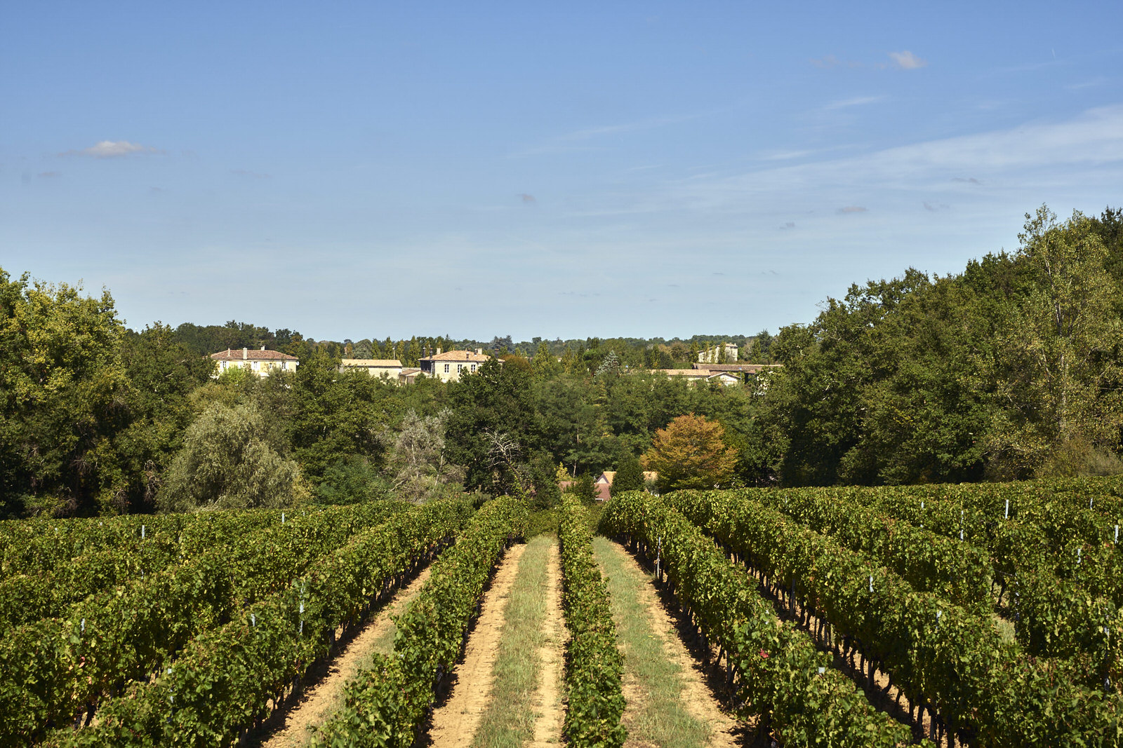 Reportage photo - Domaine viticole 6