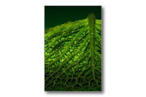 Impression d'art - Tableau culinaire - Légume - Choux